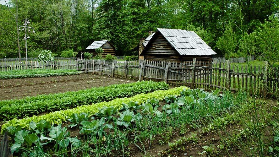 Kako započeti svoj vrt?